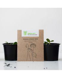 Környezetbarát reklámajándék, virágmag