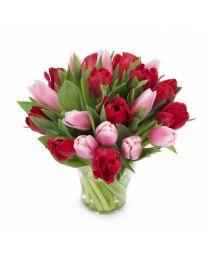 Piros és rózsaszín tulipánok - CSAK BUDAPESTEN